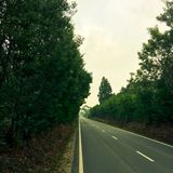 Trees grow on the sides of the outgoing road. Straight road stock images