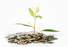 Trees grow from USD concept of business growth as the growth of trees. Stock Image