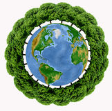 Trees growing around the Earth Stock Photos