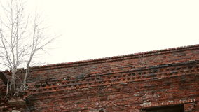 Trees growing in brick wall stock video footage