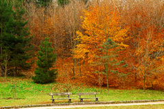 Trees in a city park in autumn season Royalty Free Stock Photography