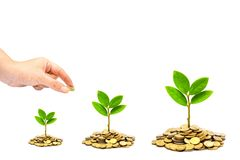 Trees growing on coins / csr Stock Images