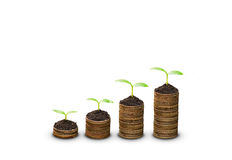 Trees growing on coins Stock Photo