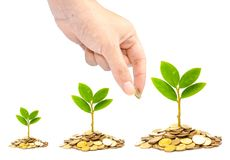 Trees growing on coins Royalty Free Stock Image