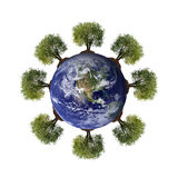Trees growing from the earth Royalty Free Stock Images