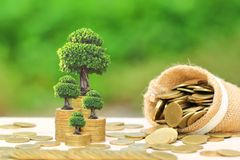 Trees growing on gold coins money and coin spilled from the bag stock image