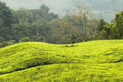 Green hills in Uganda royalty free stock image