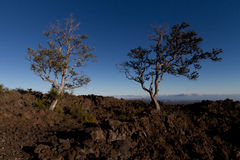 Trees growing in a old lava flow Stock Images
