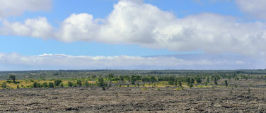 Trees growing on an old lava flow in Volcanoes National Park, Big Island of Hawaii. Panoramic view Stock Photo