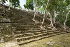 Trees growing out of pyramid stairs at Kinichna Mexico stock image