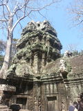The trees growing. Out of the ruins are perhaps the most distinctive feature of Ta Prohm, and `have prompted more writers to descriptive excess than any other royalty free stock photos