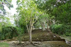 Kohunlich mayan ruins. Trees growing out of the structures at Kohunlich mayan archeological site in Mexico stock photo