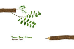 Trees growing on a pencil after Global Warming Royalty Free Stock Photo