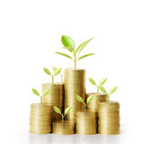 Trees growing on pile of coins money Royalty Free Stock Images