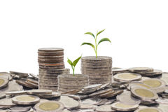 Trees growing on pile of coins money Royalty Free Stock Image