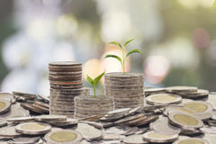 Trees growing on pile of coins money Stock Photos