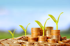 Trees growing on pile of coins money. Over green and blue sky Royalty Free Stock Images