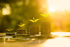 Trees growing on pile of coins money over sun flare silhouette s Royalty Free Stock Photo
