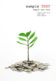 Trees growing in a pile of money. Stock Photography