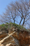 Trees growing on precipice Stock Image