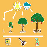 Trees3. Growing process of tree and icons Royalty Free Stock Images