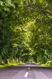 Trees growing by the road. A green tunnel over a road formed by branches. stock image