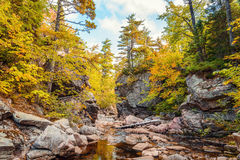 Trees growing on rocks above stream Stock Photos