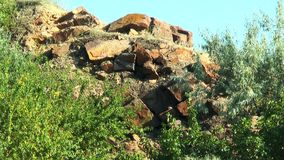 Trees growing in the rocks stock video footage