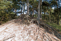 Trees growing on the sand. Stock Photos
