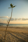 Trees growing on sand beach Royalty Free Stock Photography