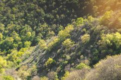 Trees growing on the slope. Wonderful view - trees growing on the slope Royalty Free Stock Image