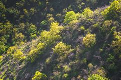 Trees growing on the slope. Wonderful view - trees growing on the slope Stock Photo