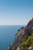Trees growing on steep and high cliffs. In background sea. Stock Photography