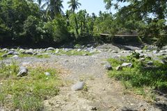 Trees grown at Ruparan river, Digos City, Davao del Sur, Philippines. This photo shows the trees grown at Ruparan river, Digos City, Davao del Sur, Philippines stock photo