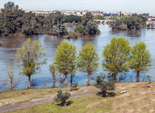 Trees in Guadiana river Royalty Free Stock Photography