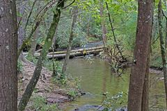 Trees toppled over a stream in the Cades Cove area royalty free stock image
