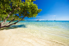 Trees hanging over stunning lagoon with blue sky Royalty Free Stock Photo