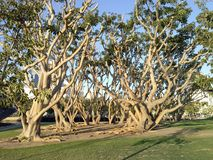 Trees by the Harbor stock photos