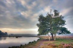 Trees on heath Stock Image