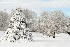 Trees Heavily Covered in Snow Royalty Free Stock Image