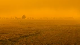 Trees in heavy fog, on a field, sunrise morning royalty free stock images