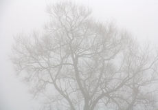 Trees through heavy mist Royalty Free Stock Image