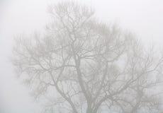 Trees through heavy mist royalty free stock image