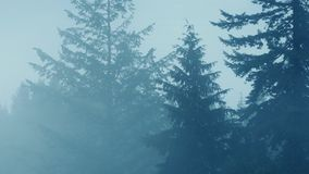 Trees In Heavy Mist And Rain. Big pine trees in the rain with mist moving past stock footage