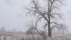 Trees in Heavy Snow stock footage