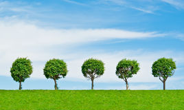 Trees on heel Stock Photo