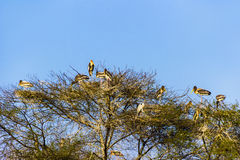 Trees with herons in the Keolado National Park Royalty Free Stock Photo