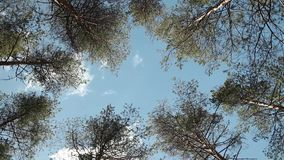 Trees High in the blue sky. Trees rotate over head High in the blue sky stock video