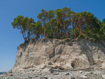 Trees on high bluff above pebble beach and bay Royalty Free Stock Photos