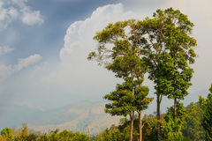 Trees on high mountain and sky Royalty Free Stock Photo